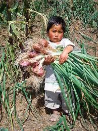 Resultado de imagen para niño campesino